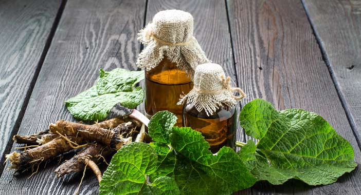 burdock plant root and oil
