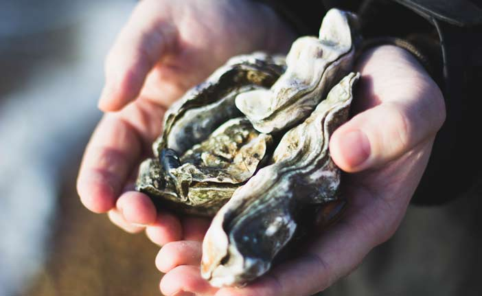 hands holding oysters